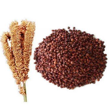 Finger Millets