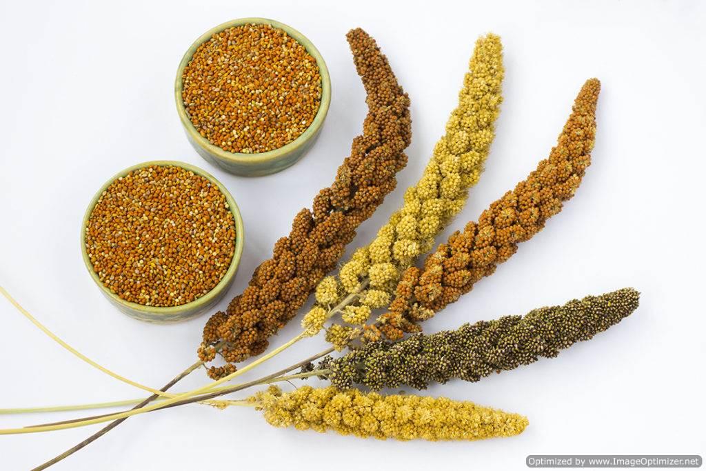 Millets on FloraFoods